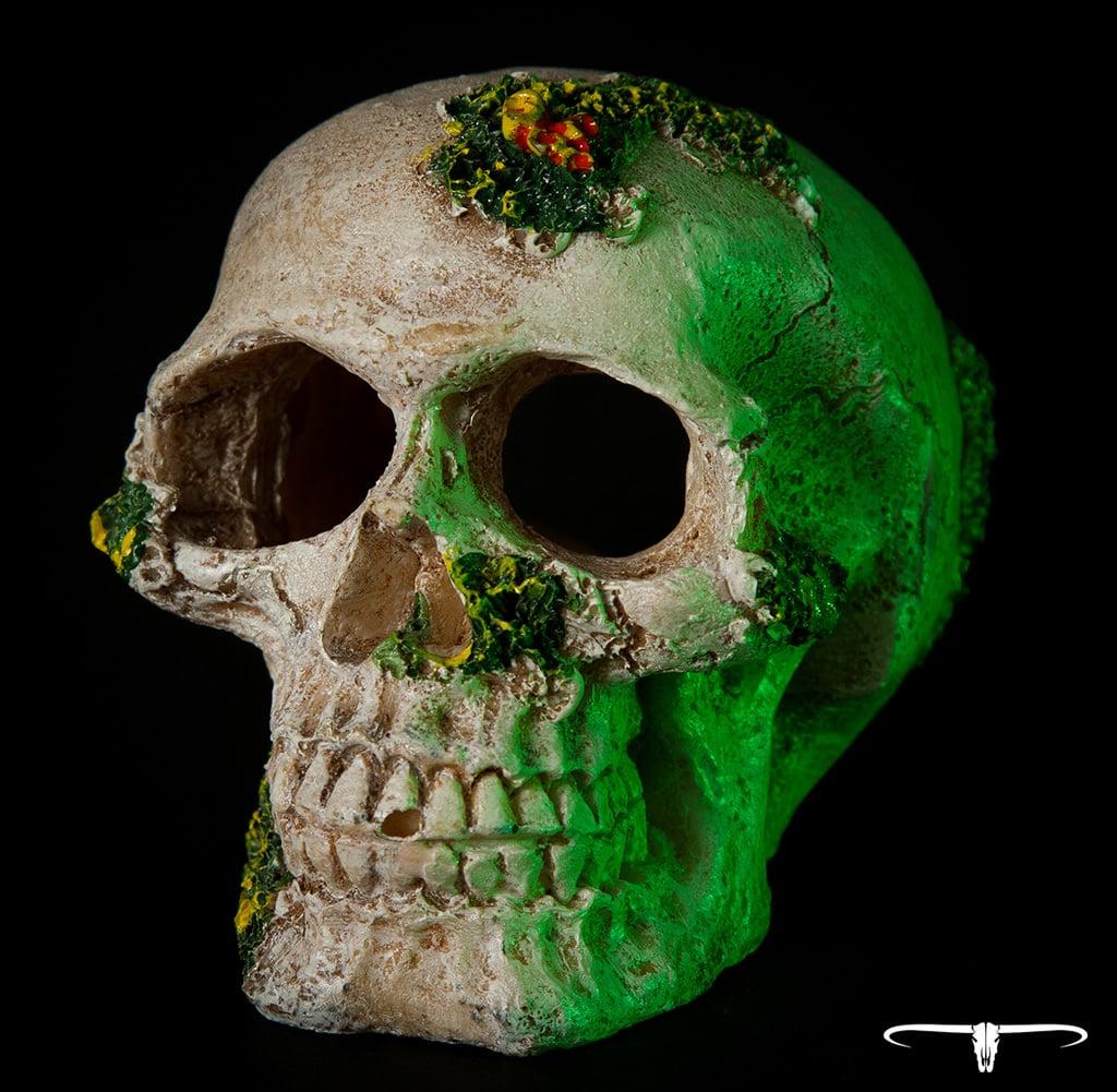 ceho-photography-skull