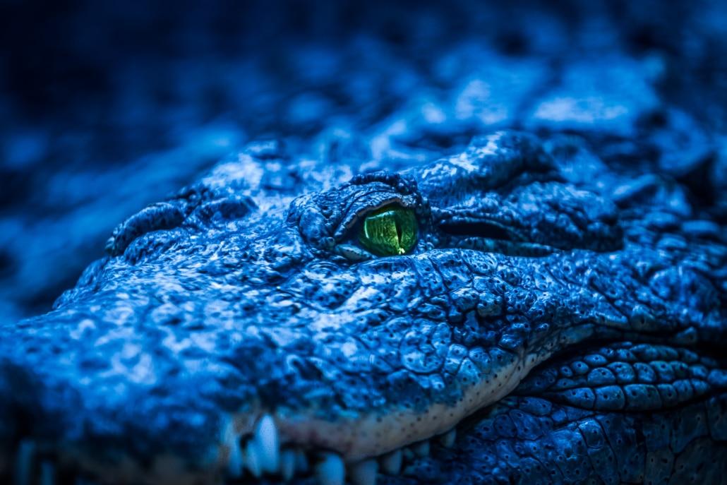 ceho-photography-crocs