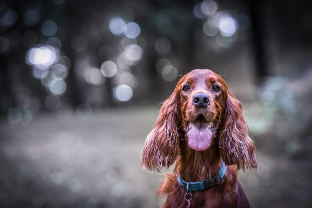 ceho-photography-animals