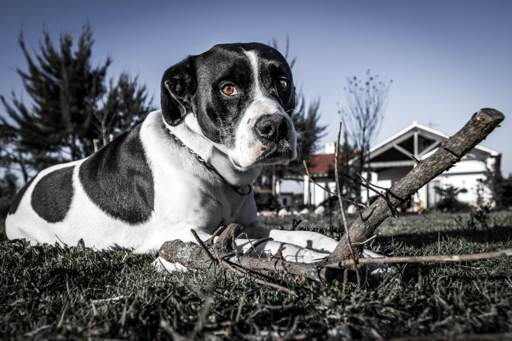 ceho-photography-animals2