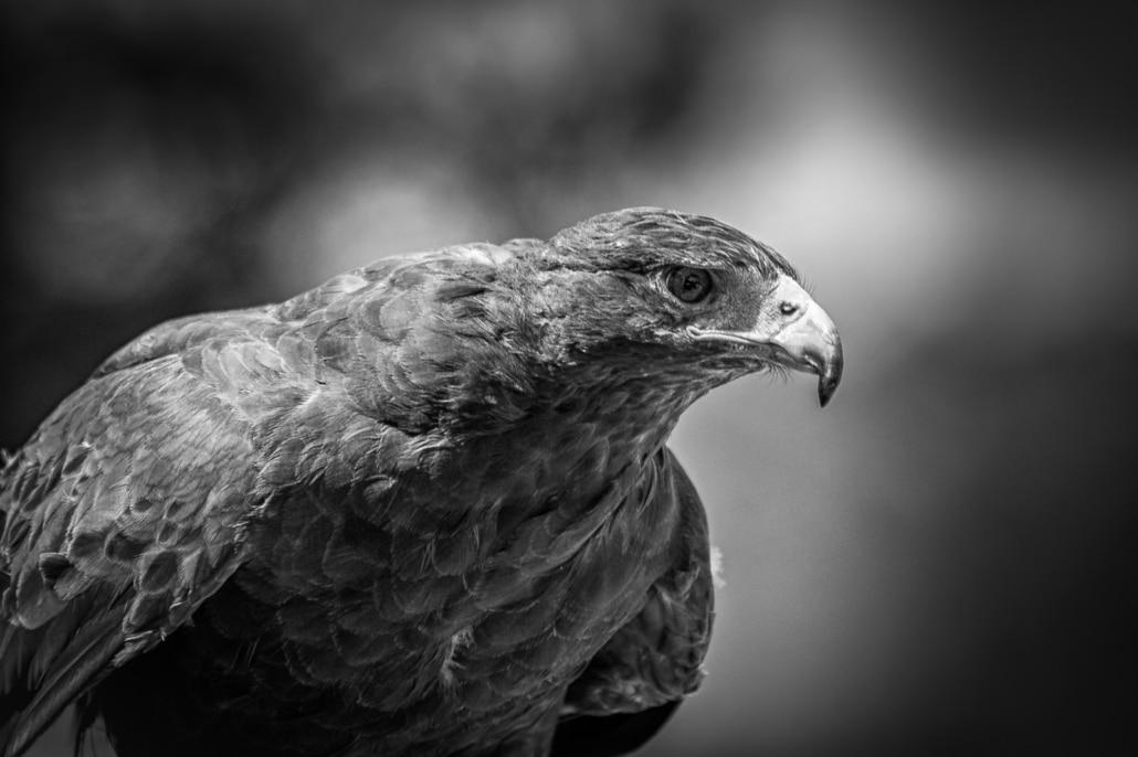 ceho-photography-wildlife